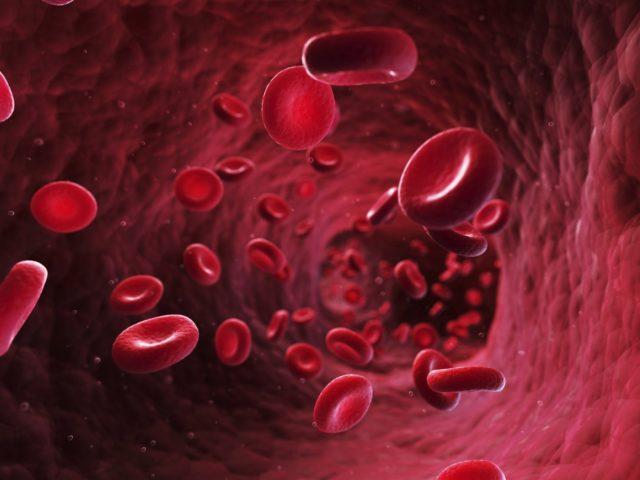 qué tan rápido viaja tu sangre por tu cuerpo