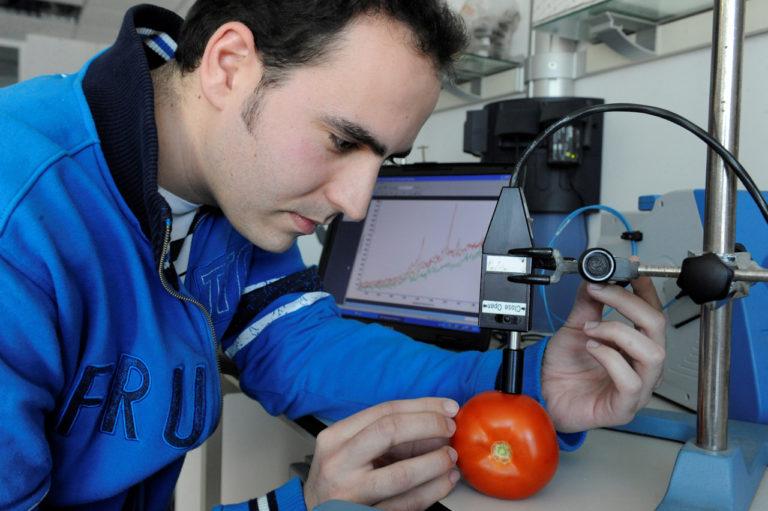 Un espectrómetro Raman portátil mide el punto óptimo de maduración del tomate