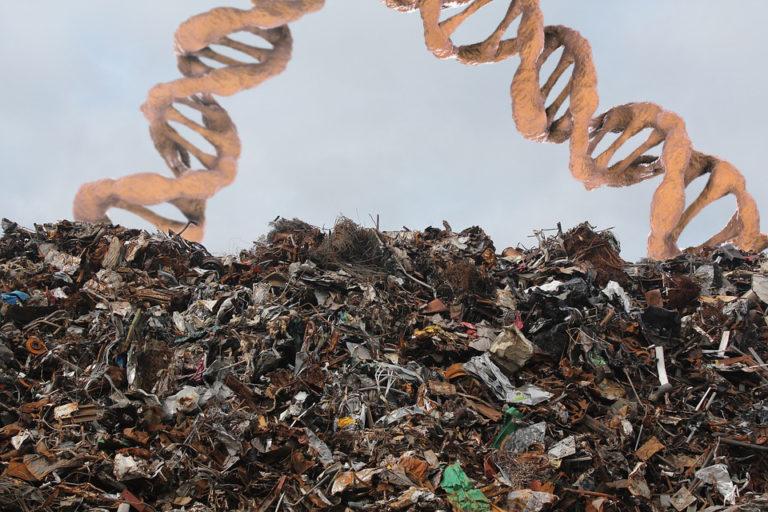 ADN basura: negacionismo y malentendidos (con cebolla) Primera parte