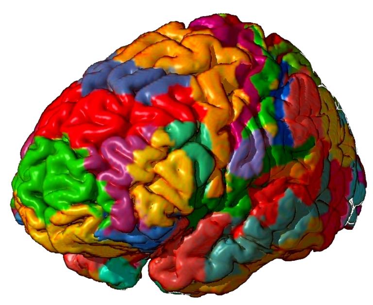 Sistemas nerviosos: el cerebro de vertebrados