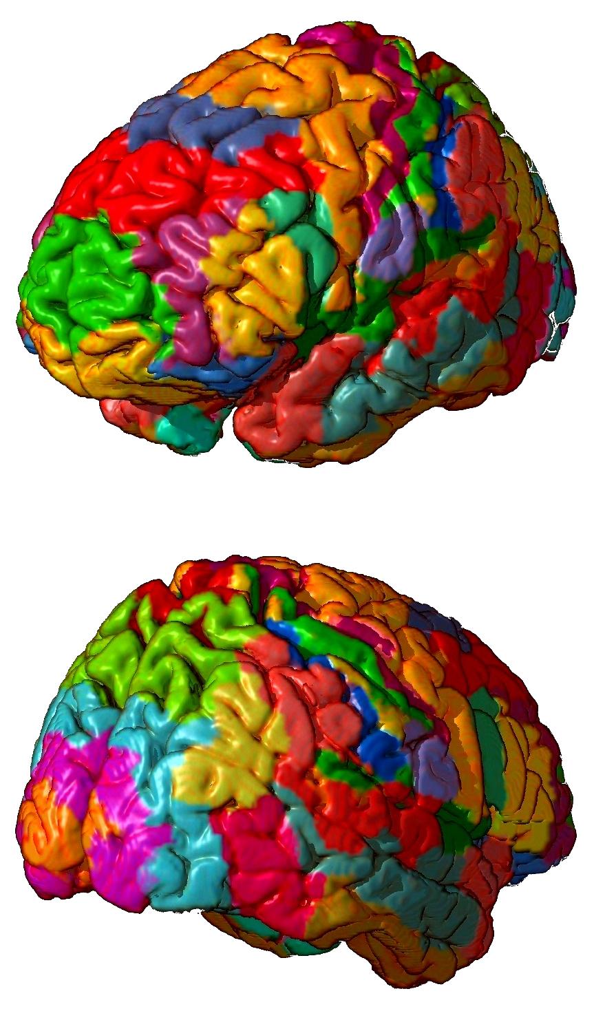 Sistemas nerviosos: el cerebro de vertebrados - Cuaderno de Cultura ...