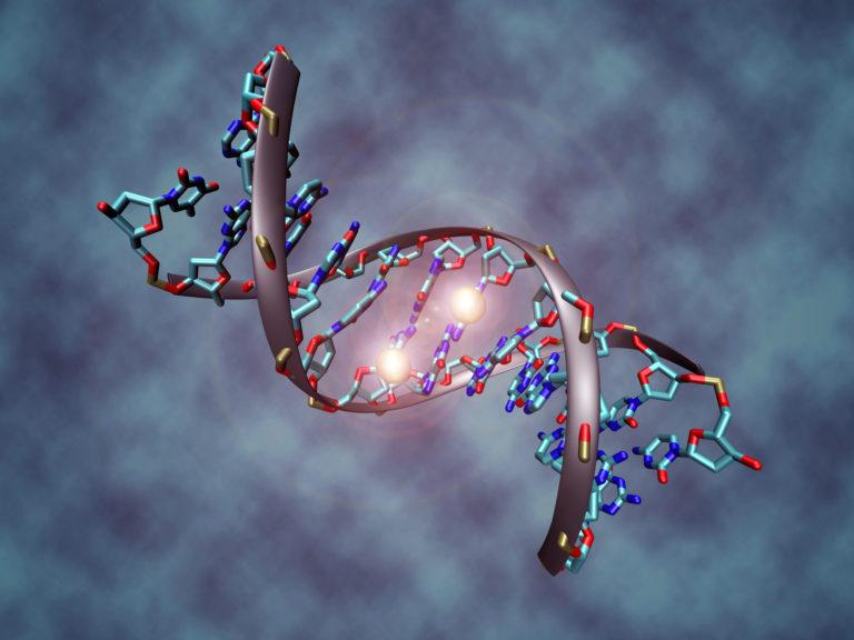 Resveratrol y pteroestilbeno en el control epigenético de la acumulación de grasa corporal