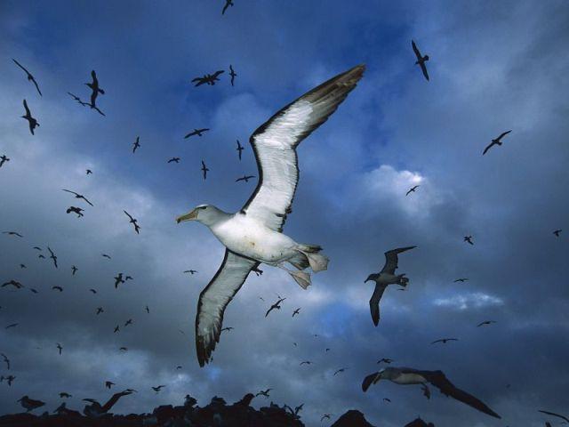 Diomedes y los albatros