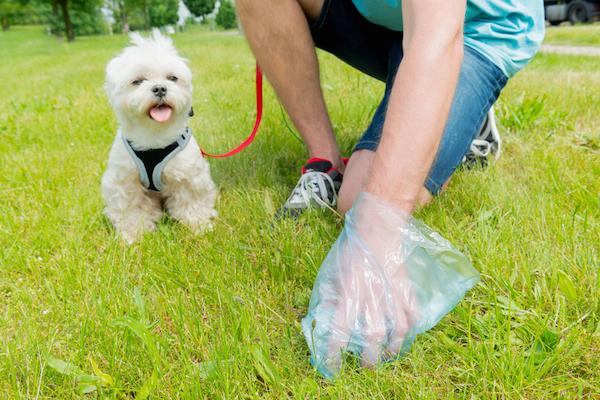 Temas emergentes: Nosotros y la caca de perro