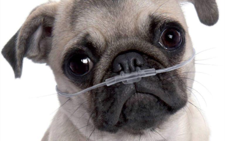 La ventilación de los pulmones de mamíferos
