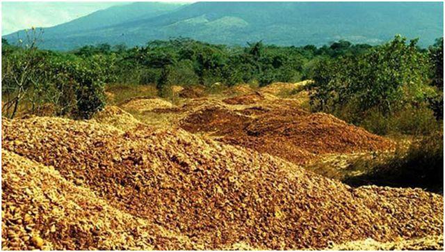 Del zumo de naranja a la selva, un ejemplo de reciclaje extremo
