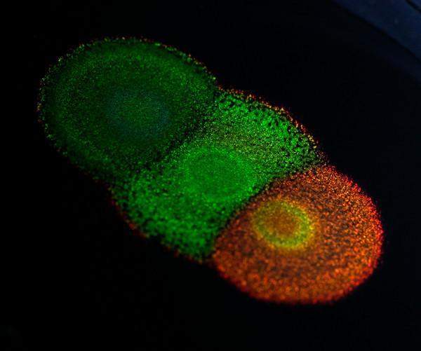 Colores vivientes: nanoestructuras que se cultivan, no se fabrican.