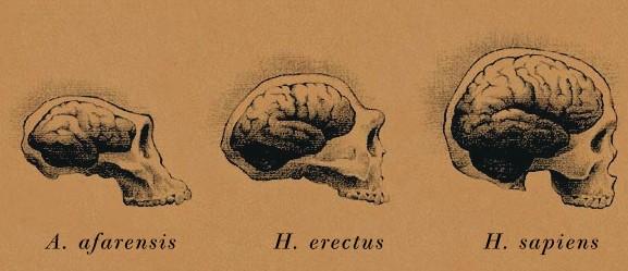 ¿Qué factores han impulsado la evolución cognitiva en el linaje humano?