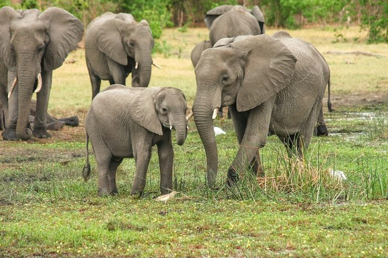¿Qué nos puede decir un elefante del cáncer en humanos?