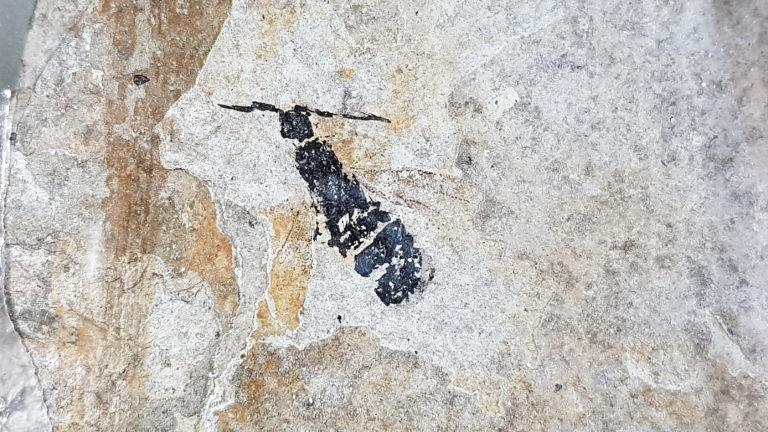 ¿Qué permitió las increíbles fosilizaciones de Burgess Shale?