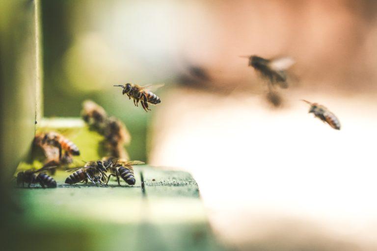 Qué puedes hacer tú para proteger a las abejas