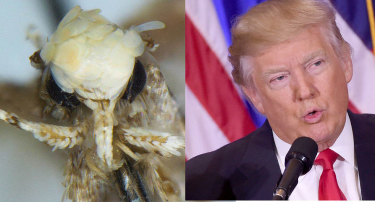 La polilla que se parecía a Donald Trump: más allá del chascarrillo