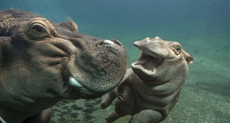 La función respiratoria depende del tamaño de los animales