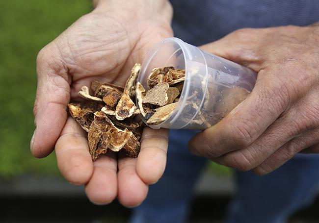 Bioóleo a partir de residuos cítricos