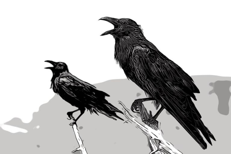 Sobre el origen del uso de herramientas en aves