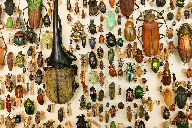 Una desorbitada debilidad por los escarabajos