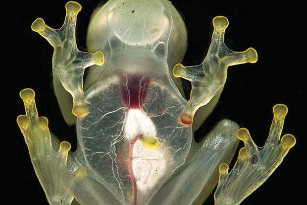 La función renal en vertebrados