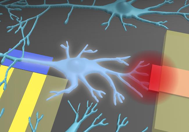 Polímeros biocompatibles para integrar dispositivos electrónicos en nuestro cuerpo