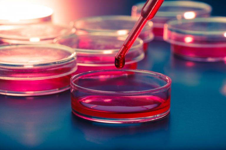 Medicina regenerativa: utilización de células madre para el tratamiento de enfermedades humanas