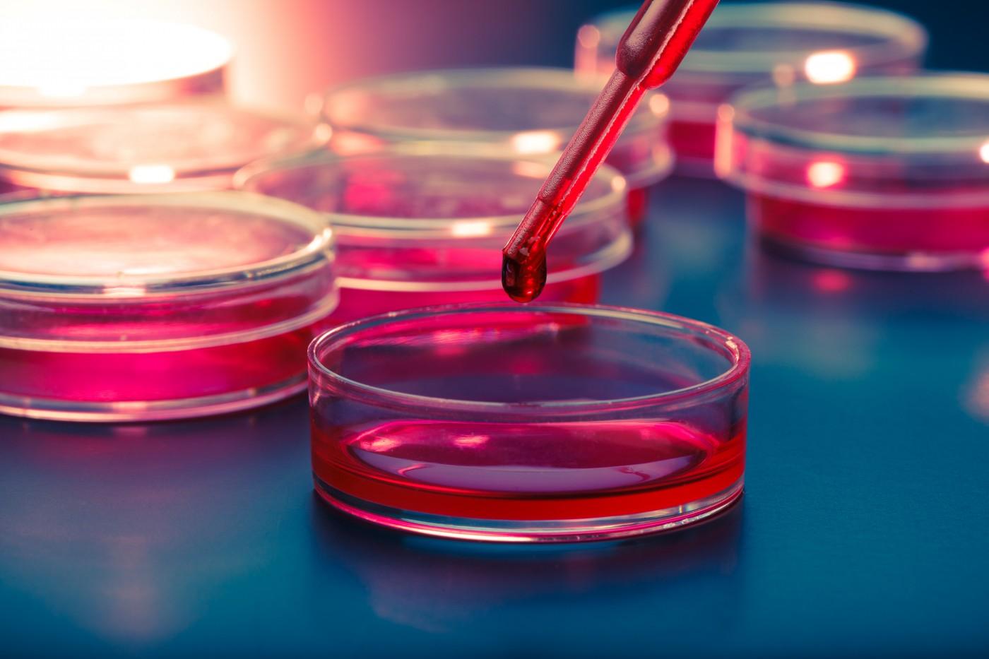 Medicina Regenerativa Utilizaci 243 N De C 233 Lulas Madre Para