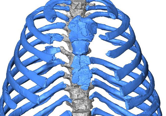 Los neandertales respiraban de otra manera