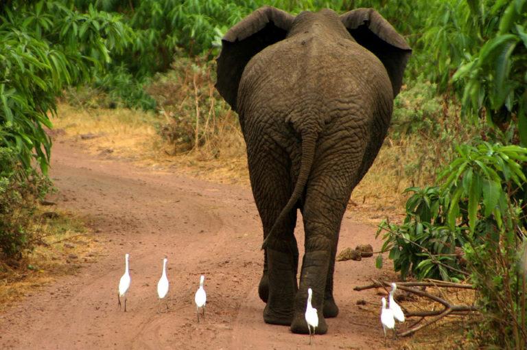 Tamaño corporal y función renal de aves y mamíferos