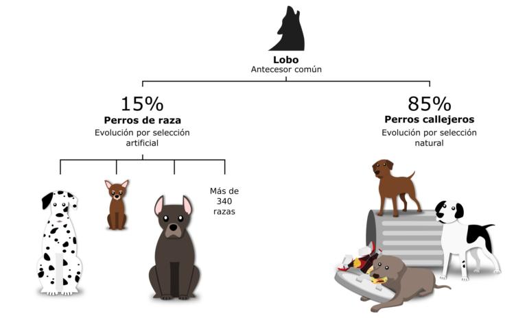 La evolución de los perros