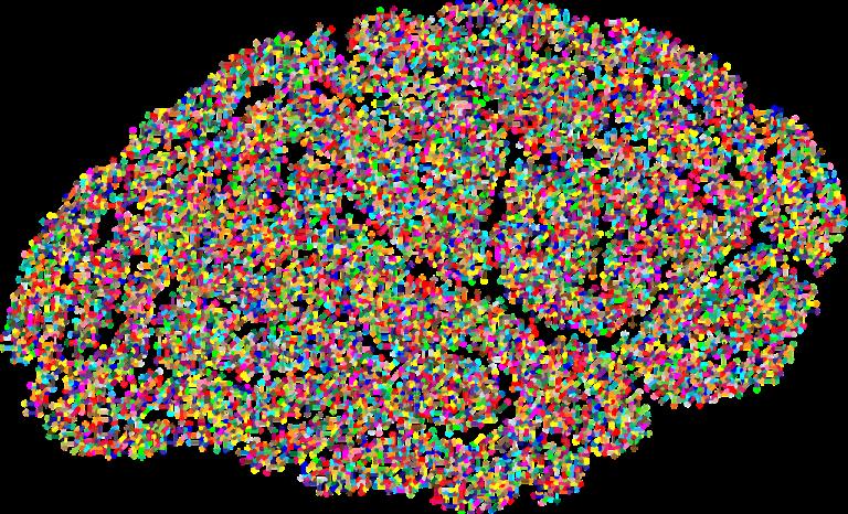 Tamaño del encéfalo e inteligencia