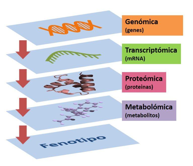 Metabolómica: el todo sobre la suma de las partes