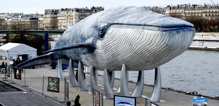 ¿Por qué son tan grandes las ballenas?