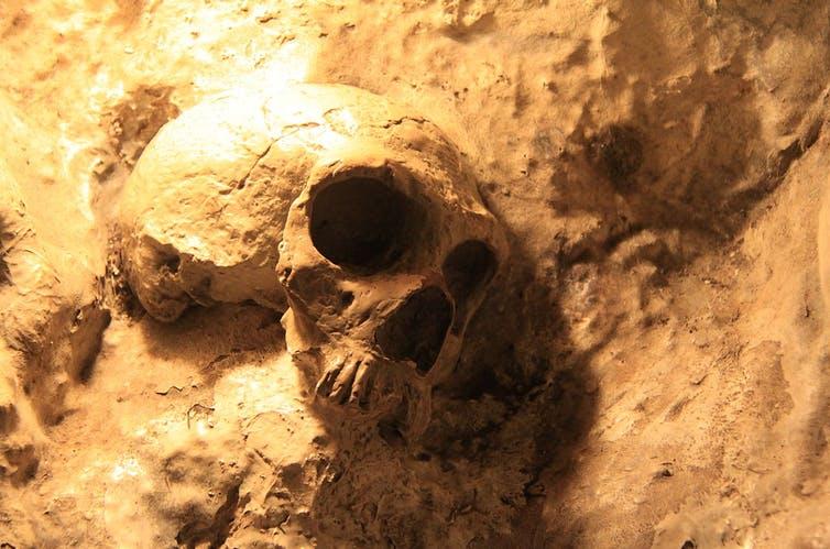 Por qué nos fascinan los neandertales