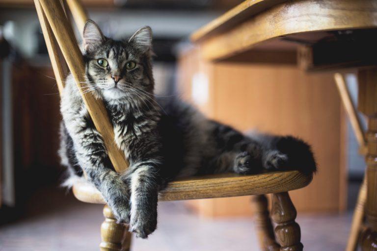 Cómo entrenar a tu gato: cuatro experimentos para saber cuánto te quiere o si pasa de ti