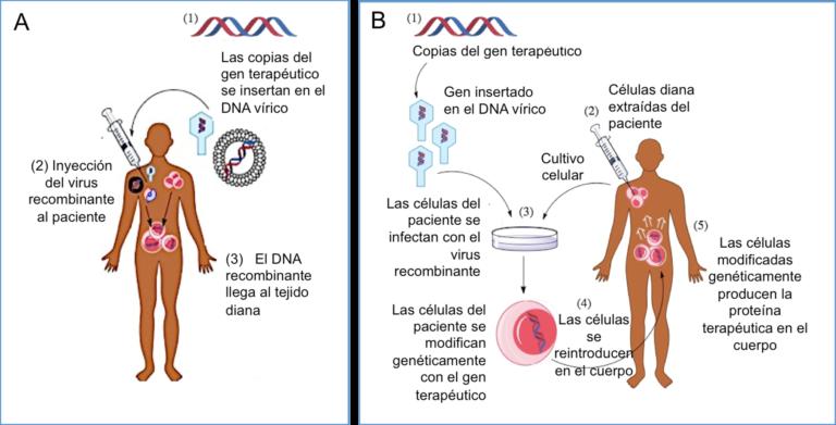 50 años modificando genes (en seres humanos)