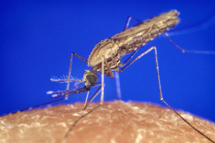 Una historia de mosquitos, escoceses, esclavos y nazis