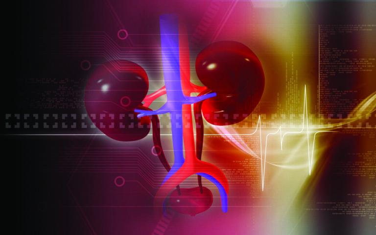 Nuevos biomarcadores en niños con enfermedad renal crónica