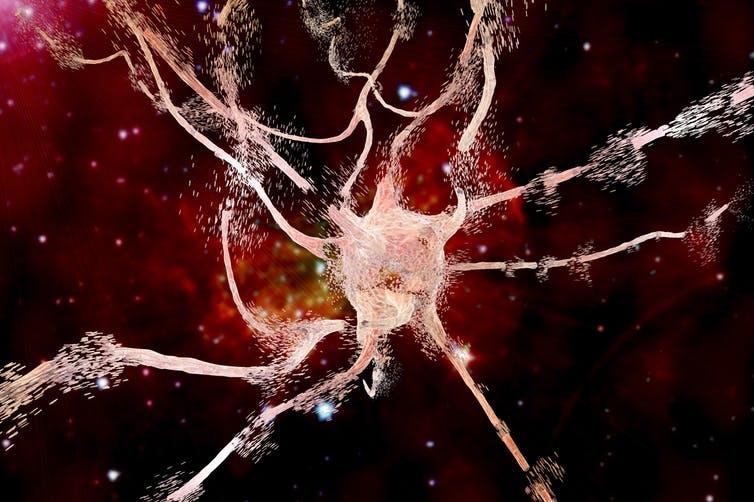 El límite entre la vida y la muerte en las neuronas