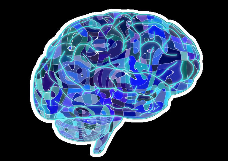 El cerebro también se puede donar (y no es necesario estar sano)