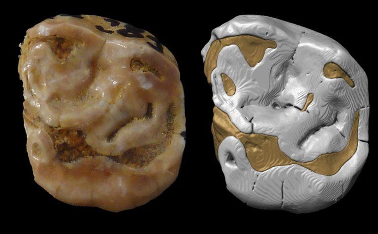 Nuevos neandertales del País Vasco (y algunos que dejan de serlo)