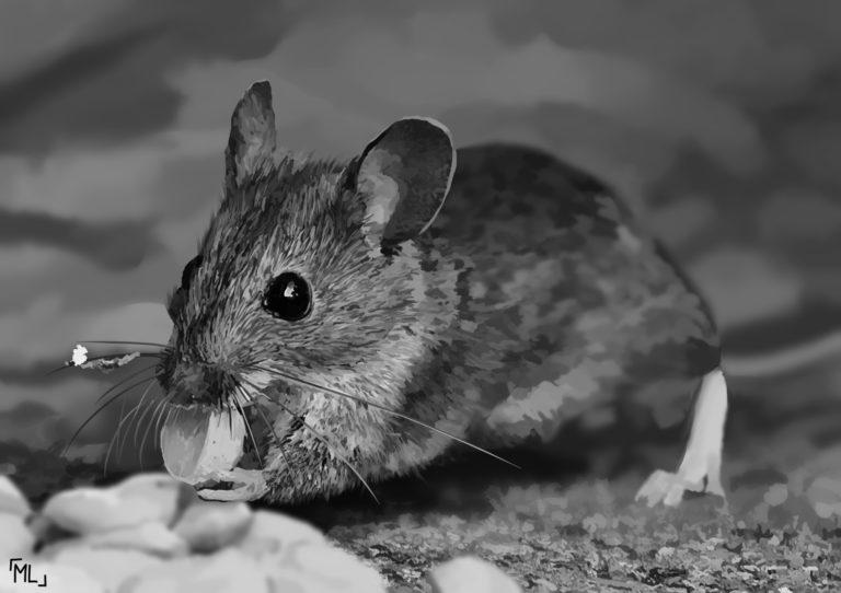 El letargo del ratón