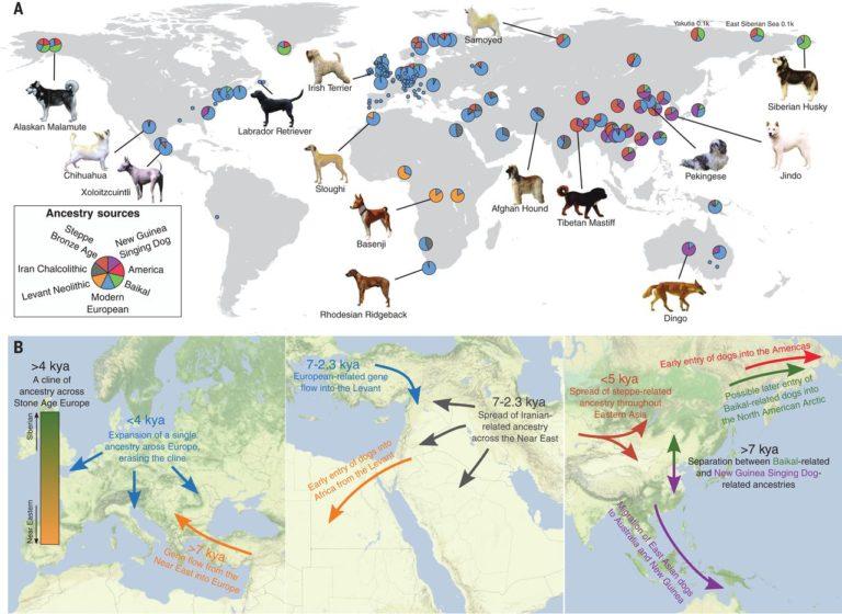 Origen y legado genético de los perros prehistóricos