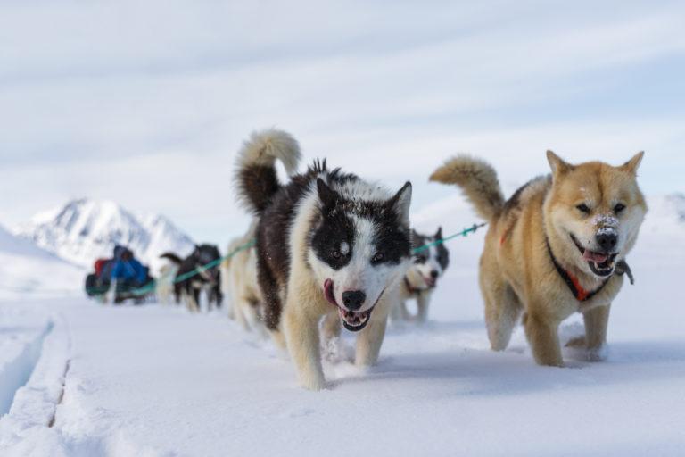 Los perros de trineo más antiguos
