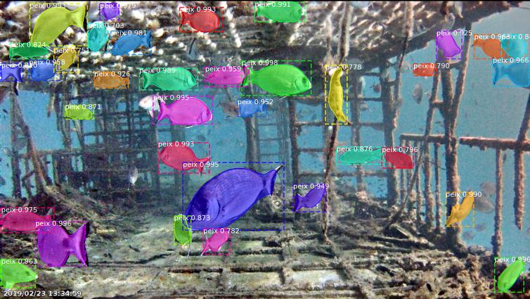 Así enseñamos a los ordenadores a identificar especies de peces