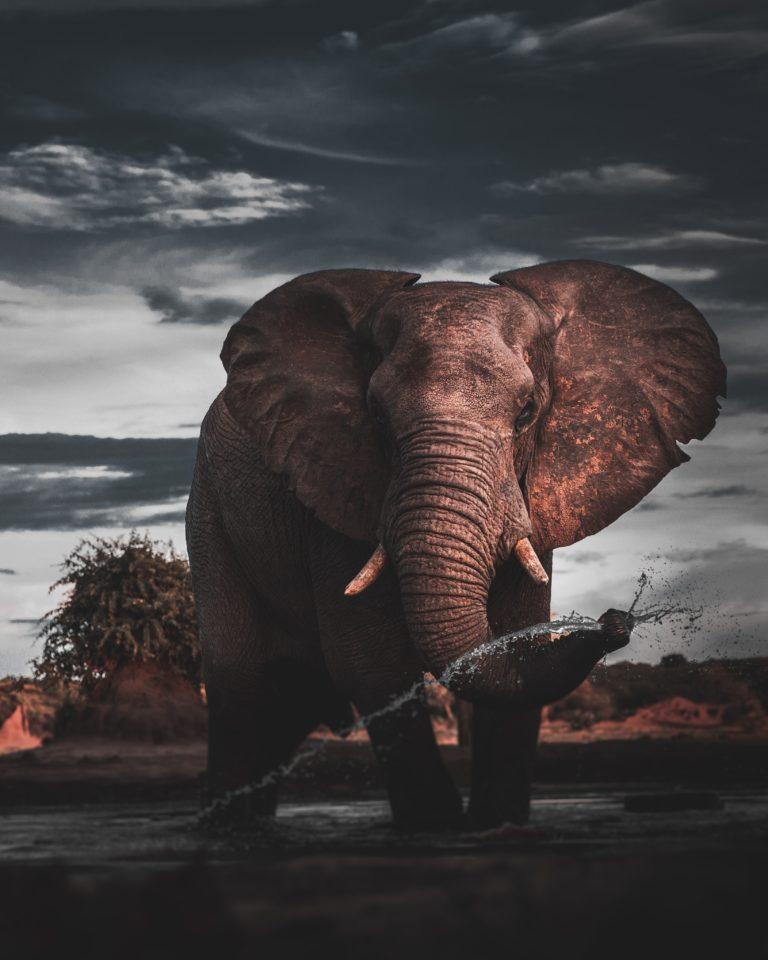 ¿En qué se parecen un trombón y un elefante?