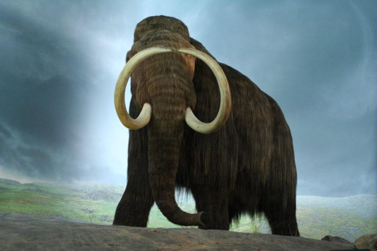 El misterioso caso del chuletón de mamut