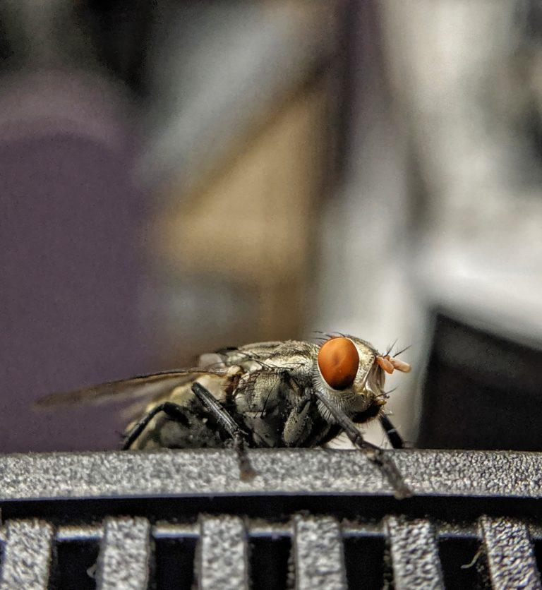 Adela Torres – Naukas Bilbao 2019: ¿Dónde está la mosca?