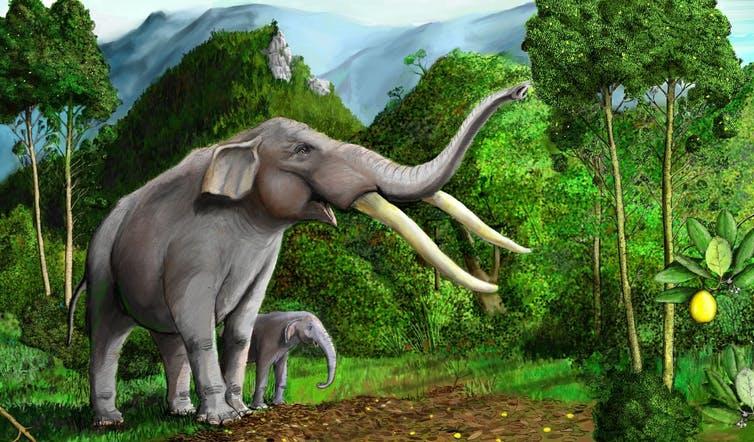 La extinción de la megafauna chilena dejó a este árbol sin ayuda para dispersar sus semillas