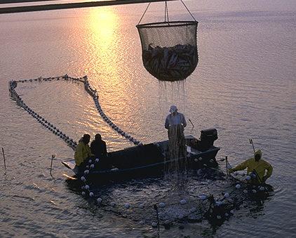 Pesca y acuicultura en el mundo