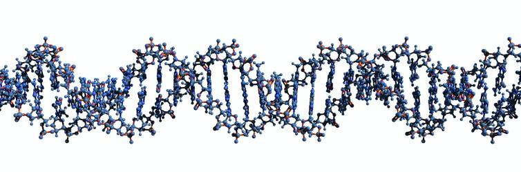 Virus con ADN «extraterrestre»