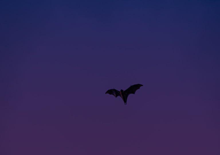 Conchi Lillo – Naukas 19: Como nunca lo has sentido