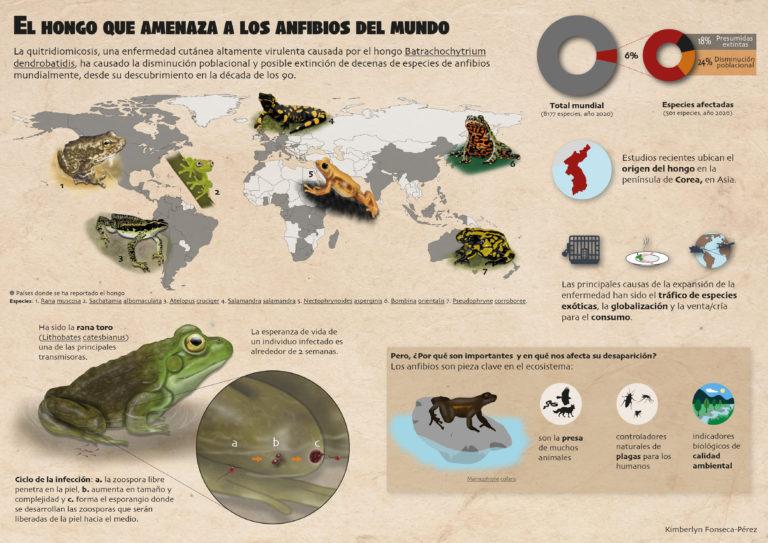 El hongo que amenaza a los anfibios del mundo
